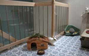 Indoor Gehege mit Kaninchen